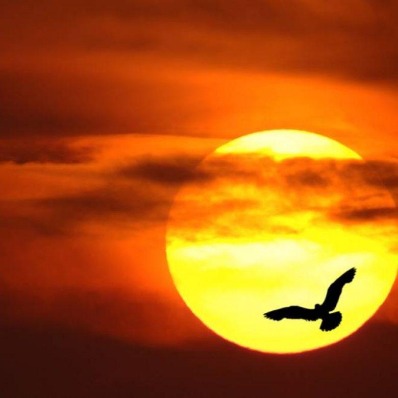 Macedonian Sun and the Little Bird